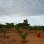 Fazenda-da-Solidariedade (1)
