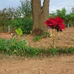 Fazenda-da-Solidariedade (7)